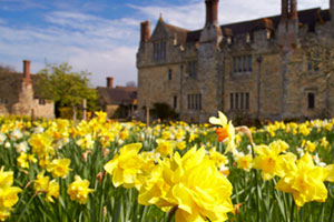 Hever Castle : Dazzling Daffodils