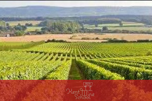 Hotel du Vin : English Wines: Kent Wine School